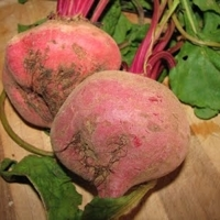 Roasted Beets with Horseradish Cream