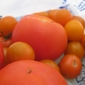 csa week 6 - TOMATOES are here!