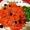 Classic Carrot & Raisin Salad Tossed with Honey & Sesame Dressing