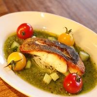 Roast Sea Bass (Suzuki) with Cucumber Gazpacho
