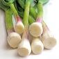 Market Matters- Green Garlic, Leek & Goat Cheese Soufflé