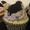 オレオのカップケーキ