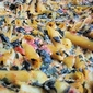 Two Cheese Pasta Casserole
