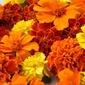 Marigold Corn Pone with Marigold Honey ...inspired by Garden Spells