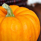 Pumpkin maple waffles