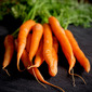 Market Matters- Mommy Approved Thanksgiving Carrots with Ginger, Tangerine & Chives