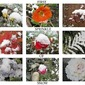 Mosaic Monday ~First Snow and Soup to Satisfy