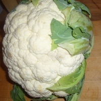 The Twisted Cauli.