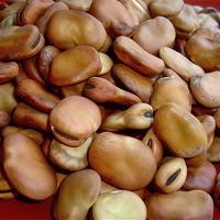 Lamb Meatball and Fava Bean Tagine / Morocco