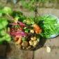 Hodge Podge (A dinner of New Vegetables)