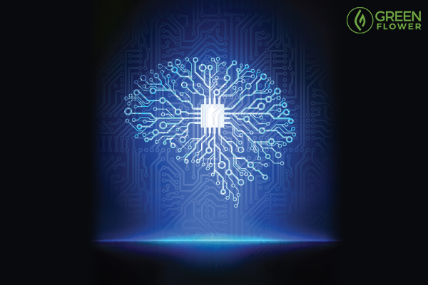 brain scan showing amygdala