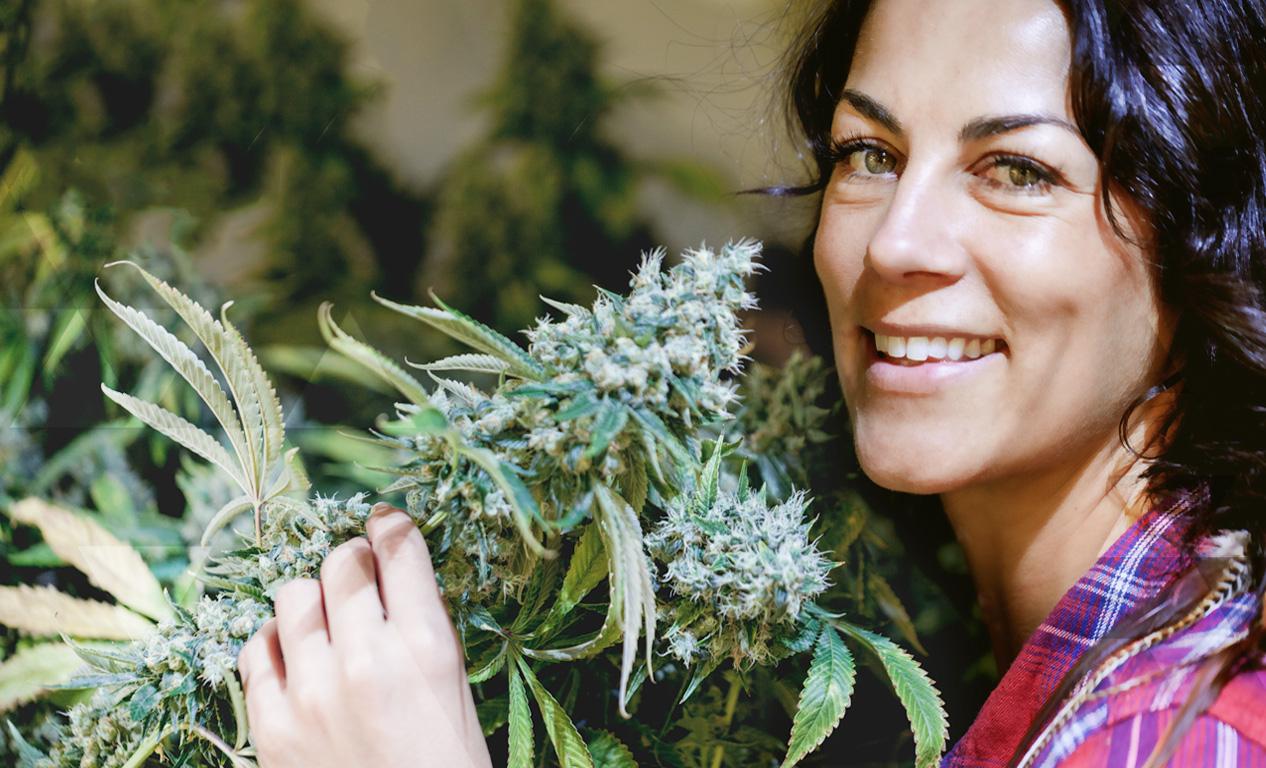 Grow your own indoor organic cannabis