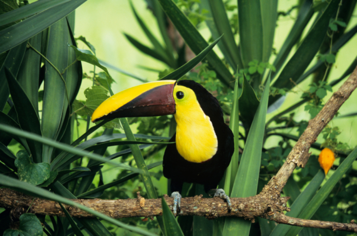 Win free airfare, stays at luxury resorts in Costa Rica, Toucan Rescue Farm OR hike through rainforest OR ziplining