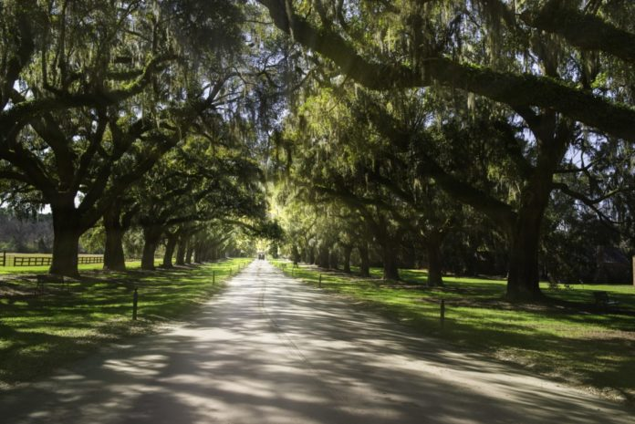 Find out what made our list of the best luxury hotels in Mount Pleasant, South Carolina