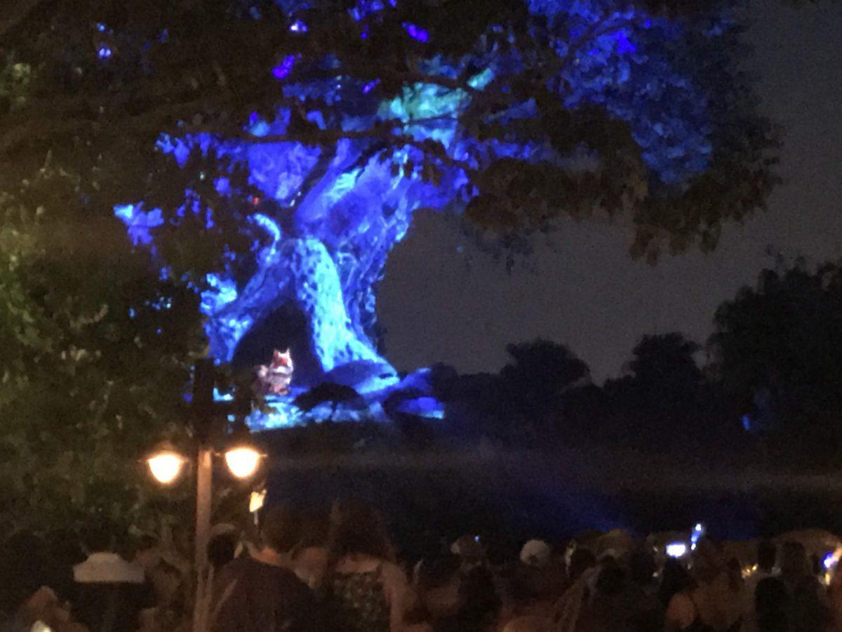 See Tree of Life Nighttime Awakening at Disney World at night