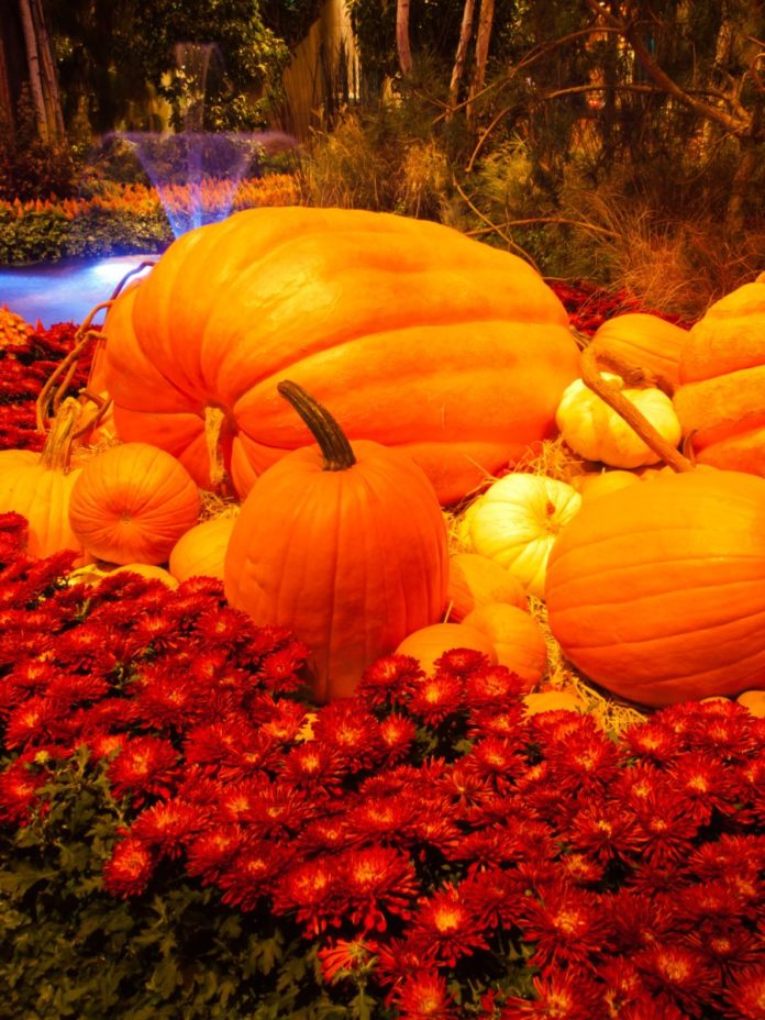 Learn about the Autumn Celebration At Bellagio In Las Vegas & how you can get a discounted hotel rate
