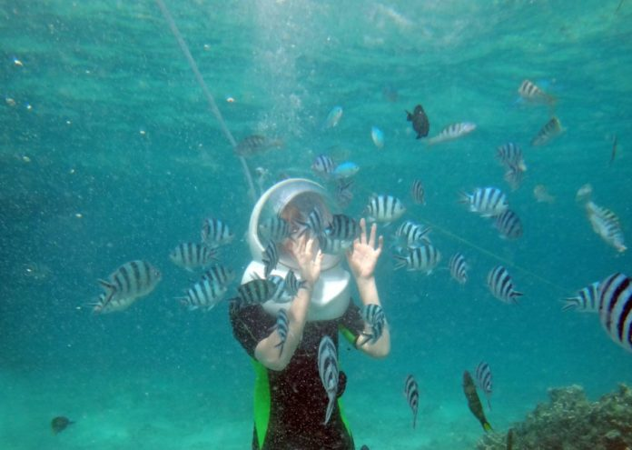 Discovery Cove SeaVenture experience flash sale