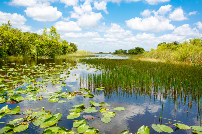 Best tours in Everglades National Park in Florida