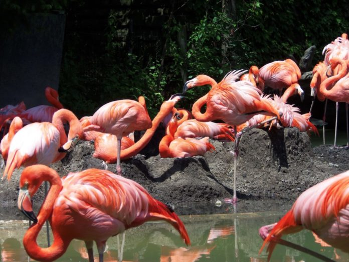 Enter Nationwide - Ultimate Zoo Experience Sweepstakes for a free vacation in Columbus, Ohio