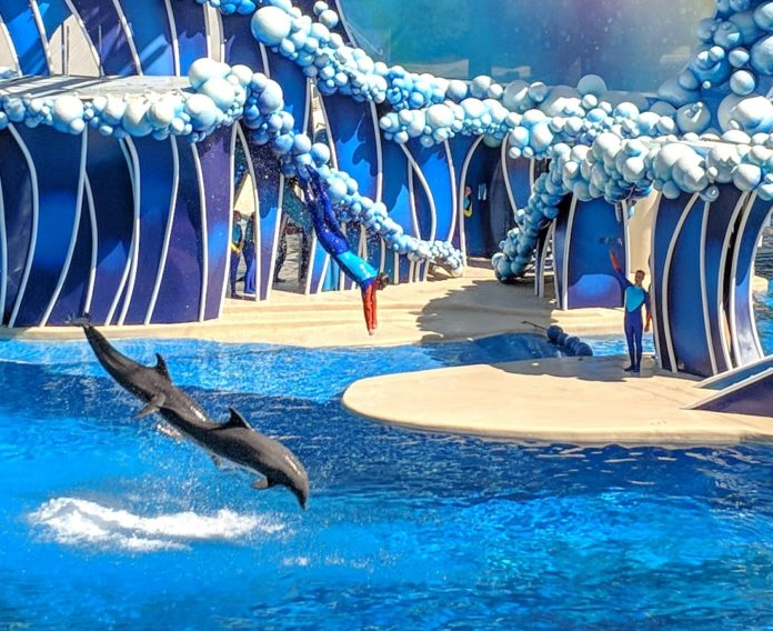 Find out how you can save money with SeaWorld San Diego theme park's Black Friday Deals
