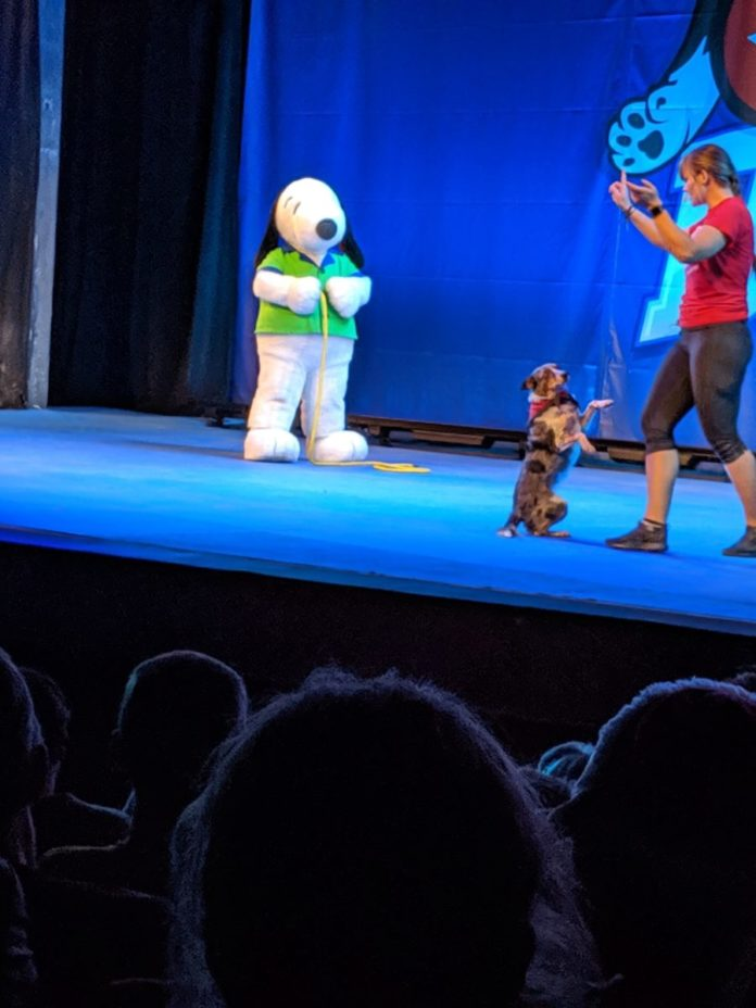 See a dog stunt show at the Peanut Celebration event at Carowinds in Charlotte NC