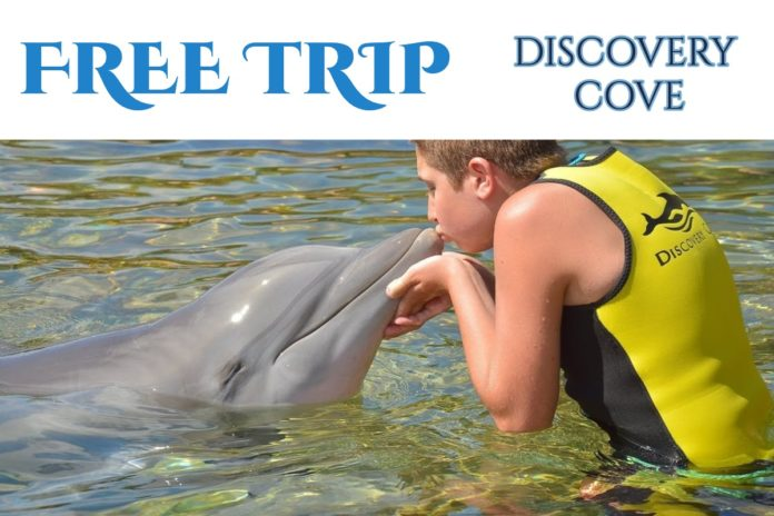 How to win a free trip to Orlando, Florida to visit Discovery Cove