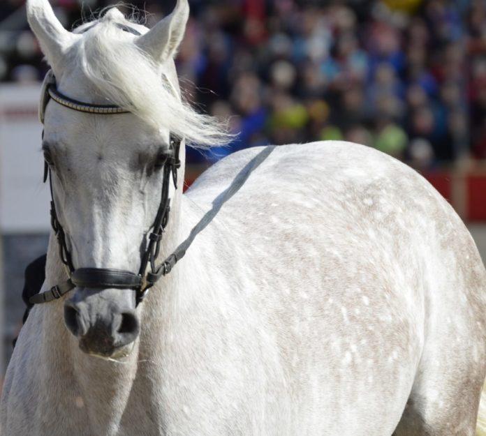 Coupon code for Scottsdale Arabian Horse Show in Arizona