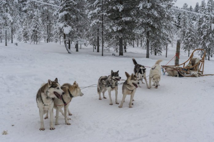 Find out what the best Saariselkä, Finland hotels are & how to book them at the lowest available rate