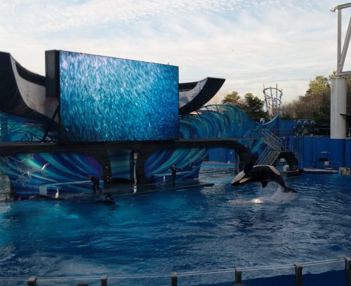 SeaWorld Florida resident tickets. Save 60% on admission