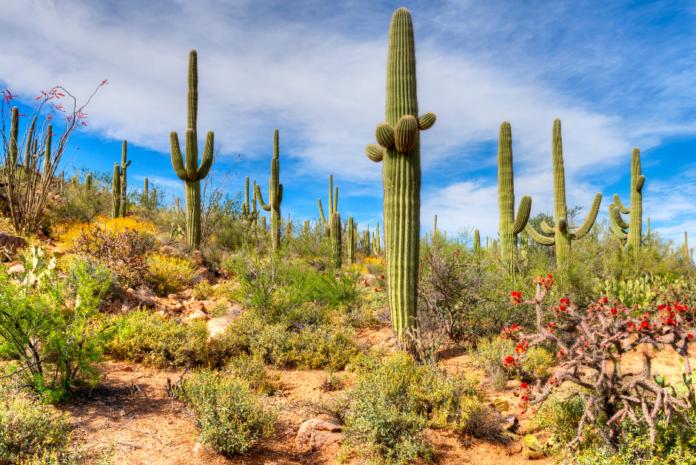 Phoenix/Scottsdale area ATV tour in the Sonoran Desert