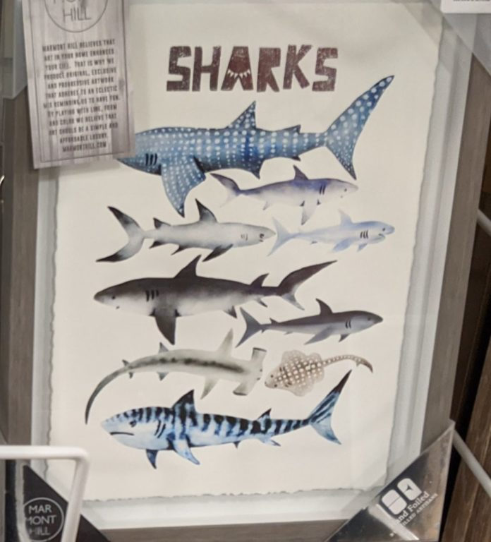sharks wall art beach home decor
