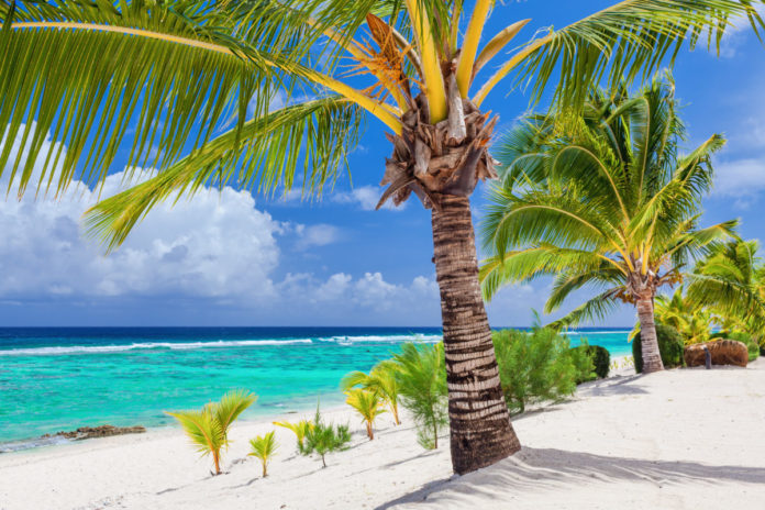 Palm trees overlooking tropical sandy beach on Roratonga, Cook Islands. Learn how to get a free trip
