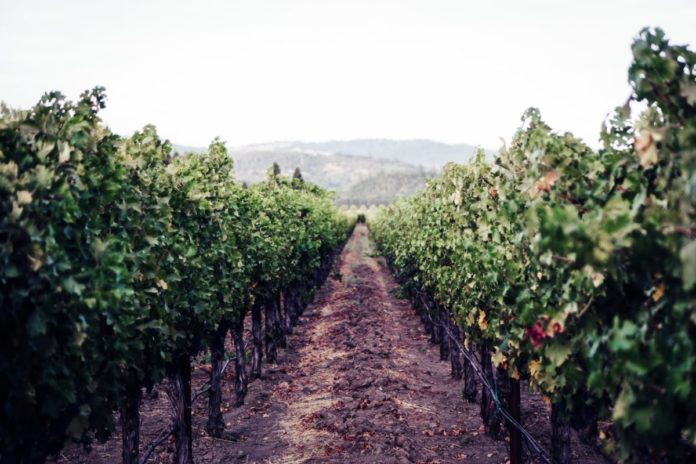 Private tour of the best wineries of Sonoma and Napa Valley