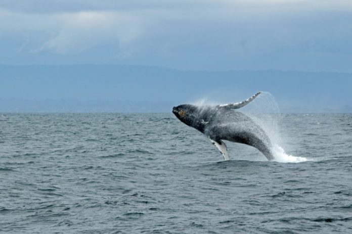 Have a fantastic afternoon on California's Monterey Bay spending time seeing native wildlife and the beautiful coastal scenery of the bay.