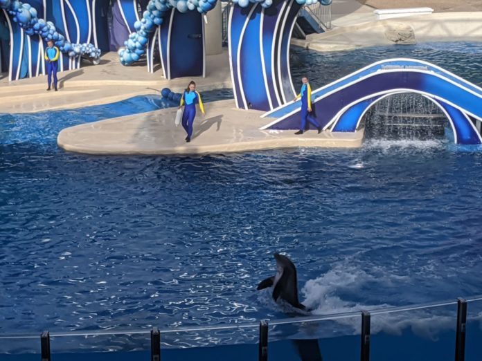 SeaWorld in Orlando, Florida is reopening. Find out what our tips are for visiting!