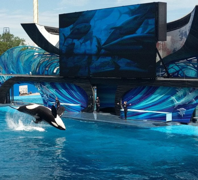 SeaWorld Texas flash sale for general admission tickets
