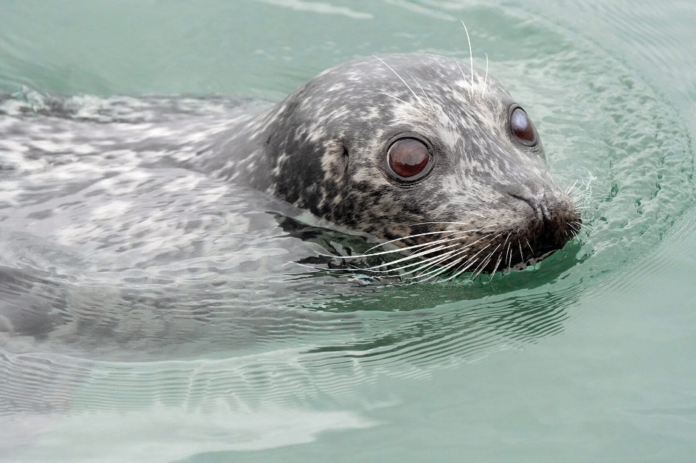 Lowest price available online for snorkeling with seals in Vancouver, BC