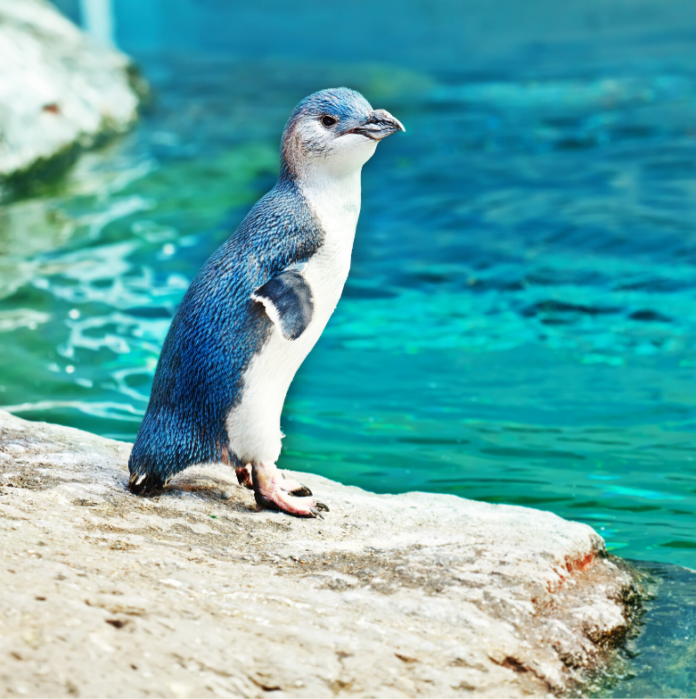 Coupon. promo code for admission into International Antarctic Centre