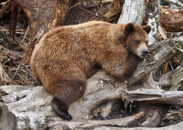 See wildlife and a volcano on a 5 hour small group safari from Sitka, Alaska.