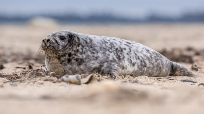 Lowest price available for Private Seal Safari In Amsterdam in the Netherlands
