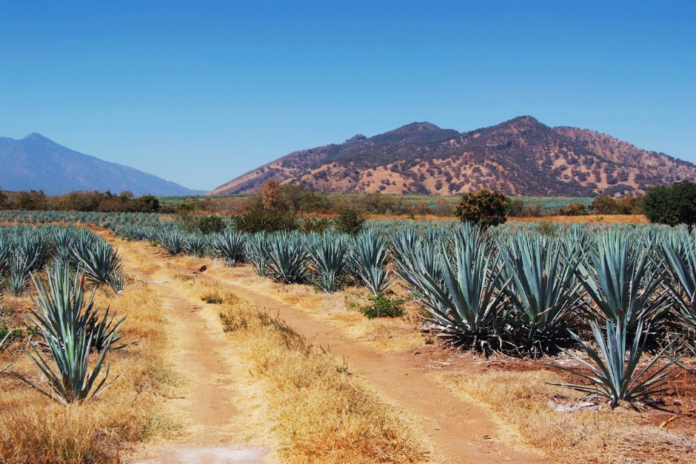 Win a stay at at Hotel Solar de las Animas in Tequila, Mexico & airfare