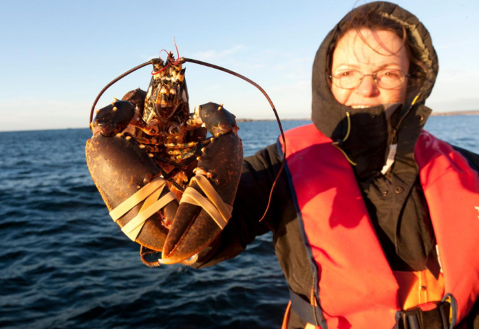 Coupon For Boston Harbor Lobster Charter, Catch & Cook