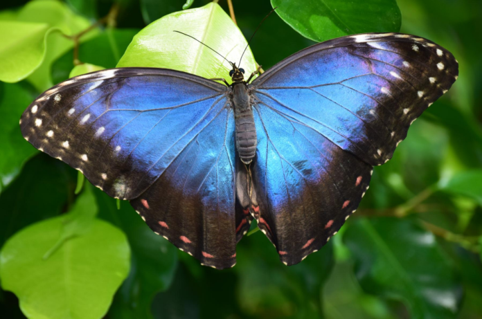 Coupons, promo code for Houston Museum of Natural Science, See Butterfly Center, Planetarium & Ancient Egypt Hall