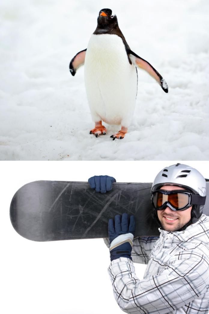 Enjoy seeing penguins, snowborading, skiing & fun int he snow at Ski Egypt