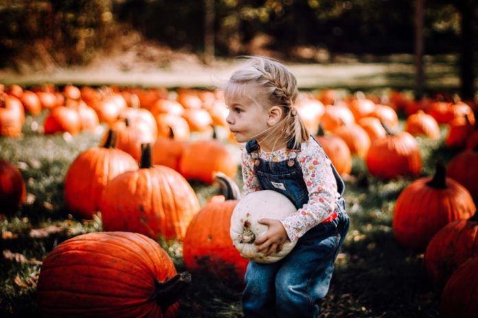 Discount ticket for Pumpkin Patch & Corn Maze In Nickerson, Nebraska