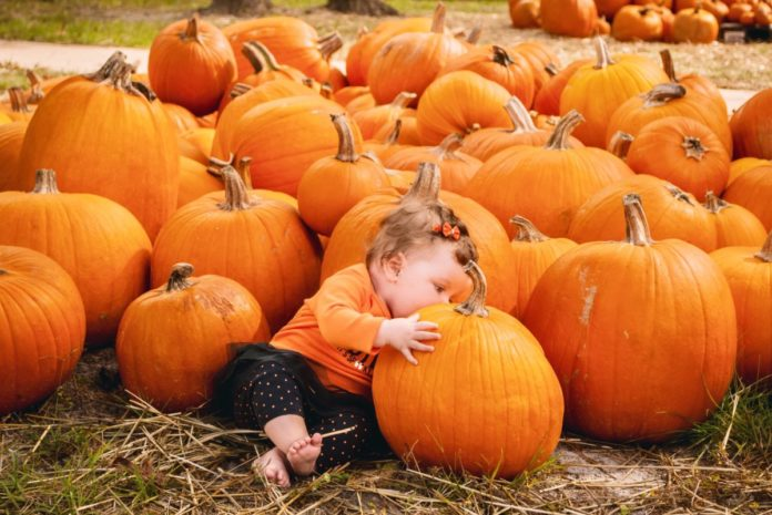 Up to 40% off admission to Hogan Farms Pumpkin Patch & Corn Maze Brownsburg IN