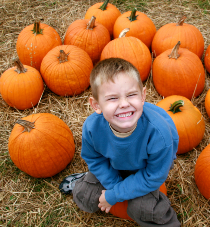 Discounted corn maze & hayride at Northern Star Farm Fall Fest in Trappe, PA