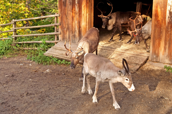 Get a Skansen combo ticket with zoo & aquarium to save money on Stockholm, Sweden travel