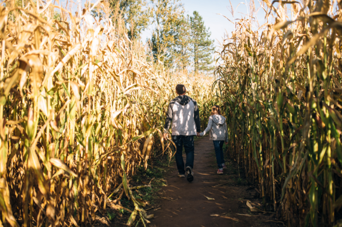 Discount price for family-friendly corn maze in Connecticut near New Haven, Bridgeport, etc.
