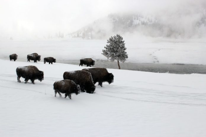5% off Winter Tour of Yellowstone National Park in Montana & Wyoming